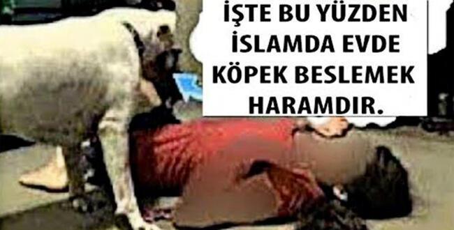 İslam Dininde Evde Köpek Beslemek Neden Haramdır? İşte Sebebi